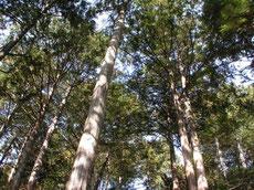 桧の無垢の木2