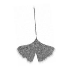 Liść miłorzębu japońskiego - Gonkgo Biloba - który zainspirował nas do stworzenia lampy Zen