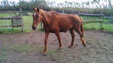 Balu  found October 2014,  15 years old