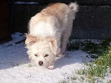 Emmy beim Spaziergang