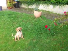 Fleur am Anfang in unserem Garten (siehe auch Rose rechts)