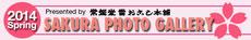 2014年度 桜フォトギャラリー