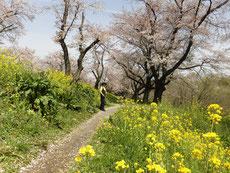 紫陽花も風景に馴染んで・・・