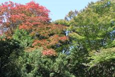 周辺の山々の紅葉もまだ進んでいない。
