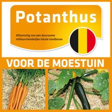 Potanthus brabant wallon
