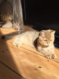 Cosmo beim Sonnen