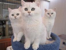 Cookie, Cooper und Mama Felicia