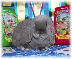 питомник-вислоухих-кроликов