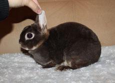 мини-кролик-купить