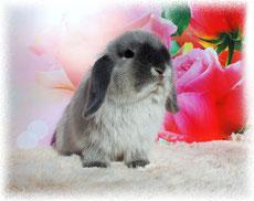 кролик NHD голубой мардер