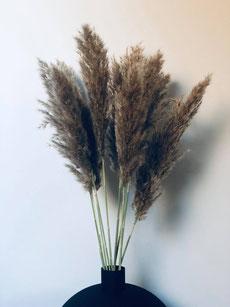 pampas, bouquet pampas, fleurs séchées