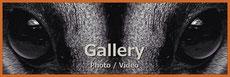 ちゃむ家のイキモノたちのフクロモモンガ写真ギャラリーバナー