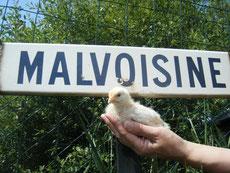 Le Relais de Malvoisine