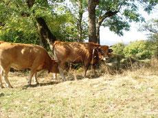Soins animaux et communication animale Agen (47- Lot et Garonne)