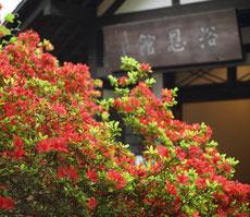 ここは小金井市の公園で、建物は小金井市文化財センターとして利用されているものでした。何か時間が止まったような不思議な場所でした