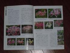 6~7ページ