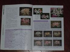 8~9ページ