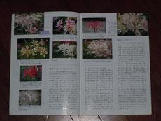 4~5ページ