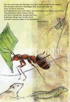 Ameise Klippdachs Heuschrecke Eidechse