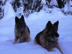 """""""Schnee-Hunde"""""""