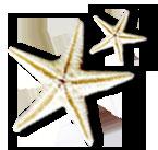 Appartements Timmendorfer Strand