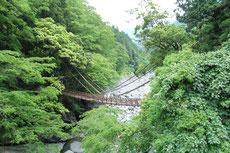 祖谷のかずら橋。もちろん…わたりません(^_^;)。