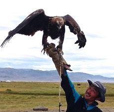 Il est pas beau notre aigle !!!