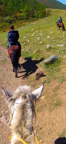 Progression à cheval en Mongolie