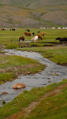 Rivières, Troupeaux de chevaux de l'Orkhon