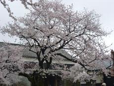 熊本城 菊陽町光の森教室