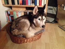 Zuviel Hund, oder zu wenig Korb? (Amarok)