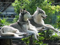 Eagle und Yukon an einem heissen Sommertag