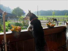 Borea geniesst die Herbstsonne