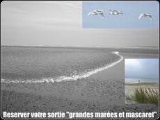 Grandes maréees en Baie de somme©Découvrons la Baie de Somme
