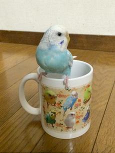 鳥づくしマグカップ 感想写真