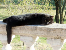 Our black cat lazily lying on the railing of our terrace