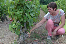 Myriam-Fouasse-Robert-guided-wine-tours-tastings-Loire-Valley-vineyard-Vouvray-Touraine-Tours-Amboise-Rendez-Vous-dans-les-Vignes