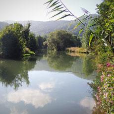 Fliegenfischen in den fränkischen Gewässern ist ein Erlebnis der besonderen Art. Fischwasser direkt vor der Haustüre an der Wiesent -  Fränkische Schweiz.
