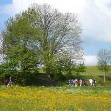 Nordic Walking - den Trendsport können Sie auch im Naturpark Fränkische Schweiz erleben. Diese sanfte Sportart schafft auch bei weniger sportlichen Personen wieder Spaß an Bewegung und Fitness. Start direkt vor der Haustüre vom Landgasthof Bieger!