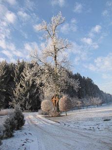 Winterlandschaft mit Wegekreuz an einem Baum (Rudelzhausen)