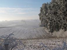 Winterliche Landschaft in der Hallertau (Berg, Lkr. FS)