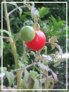 Tomate ©www.balanceYou.ch