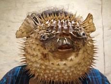 le fameux poisson-lampe