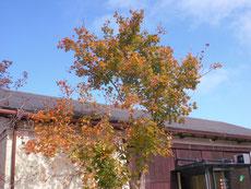 山上ではそろそろ紅葉が始まりかけている