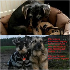 Adoptiert 2015