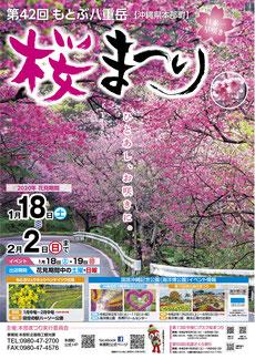 第42回 もとぶ八重岳桜まつり パンフレット