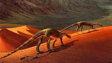 Musée des dinosaures à Tazouda