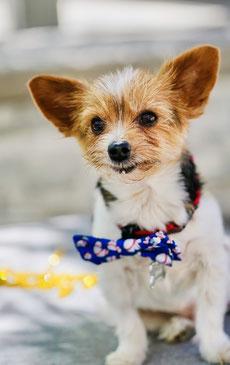 Französischsprachige Las Vegas Hochzeitsplanerin Diane bei Vegas Mobile Minister - Sag Ja in Las Vegas
