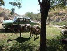 circuit Ouzbékistan Kirghizstan Chine - caravanes de Bichkek à Shanghai - route de la soie