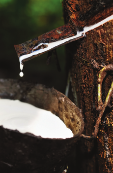 materassi in lattice naturale materassi materasso sfoderabile ferrara manifattura falomo